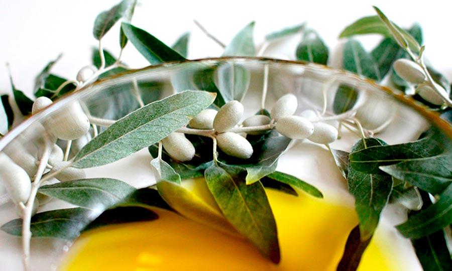 Aceite de oliva para reducir apetito-1