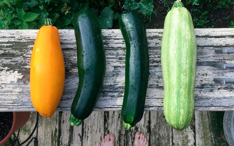 Calabacín, una hortaliza con múltiples beneficios