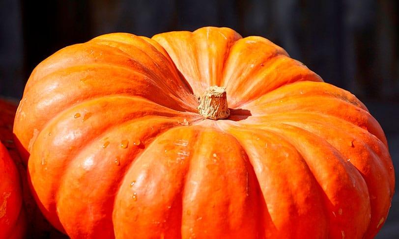La calabaza, la colorida reina del otoño