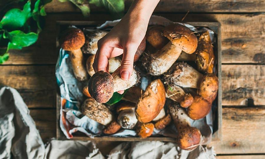 Del bosque a tu plato: temporada de setas