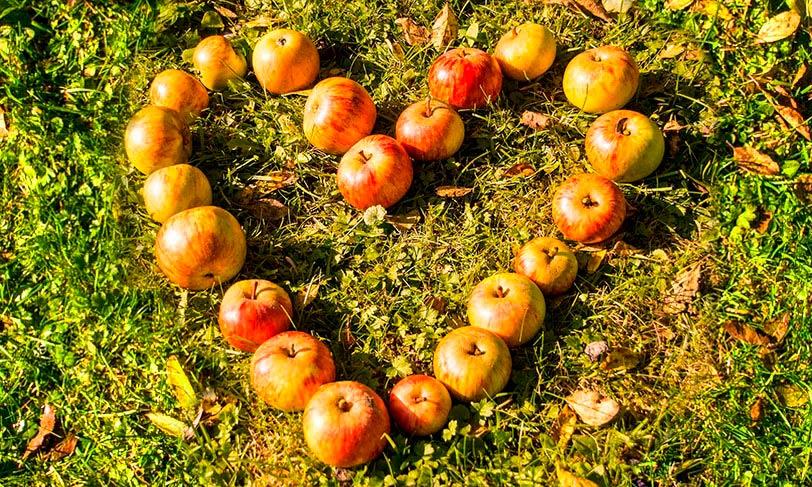 Alimentación consciente para mejorar nuestro bienestar