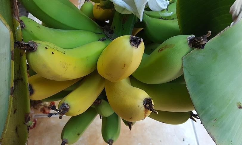 Fruta y verdura para dejar de fumar