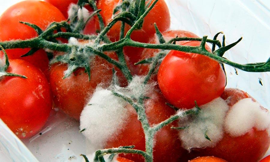 guisantes-congelados-ingrediente