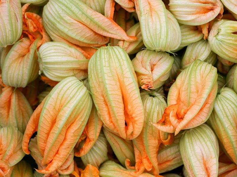 flor del calabacín